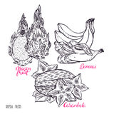 Set of sketch exotic fruits Royalty Free Stock Photos