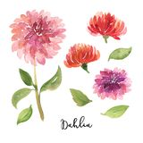 Set of sketch, sumi-e watercolor dahlia flowers Royalty Free Stock Image
