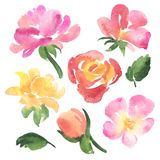 Set of sketch watercolor rose flowers and leaves Stock Photo