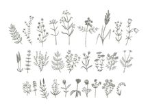 Vector Flowers Drawing. Set of sketchy hand drawn flowers. Vintage style field flowers and plants illustration collection. Creative vector floral elements for Stock Image