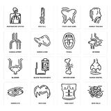 Set of Skin Cells, Men Chest, Human Eye, Broken Bone, Bladder, Tonsil, Artery, Tooth and Gums, Respiratory System icons. Set Of 16 simple  icons such as Skin Stock Photos
