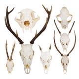 Set of skulls Stock Images