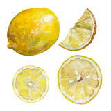The set of sliced lemon isolated on white background, watercolor illustration. In hand-drawn style stock illustration