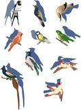Set of small birds Royalty Free Stock Images