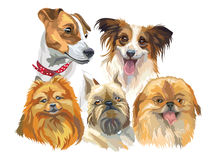 Set of small dog breeds Royalty Free Stock Photo