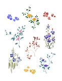 A set of small flowers watercolor with leaves. Flax Flowers. Royalty Free Stock Photo