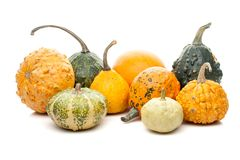 Set of small pumpkins isolated on white background Stock Images