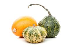 Set of small pumpkins isolated on white background Royalty Free Stock Image