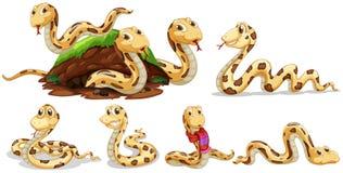 A Set of Snake on White Background royalty free illustration