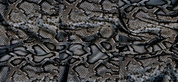 Set of snakeskin textures Royalty Free Stock Photography
