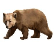Walking adult bear. Isolated realistic illustratio Royalty Free Stock Photos