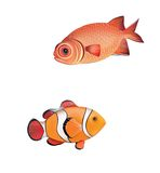 Clown fish, red fish. isolated realistic illustrat Stock Photo