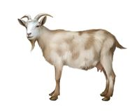 Spotted female adult Goat. Isolated realistic illu Royalty Free Stock Photography