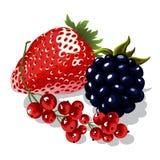 Set soczyste jagody ilustracja wektor