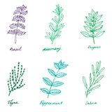 Set of some provence herbs: basil, rosemary, oregano, thyme, pep. Set of some provence herbs in sketch style: basil, rosemary, oregano, thyme, peppermint, salvia stock illustration