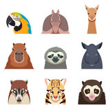 Set of south america animals flat icons. Vector image of the Set of south america animals flat icons Stock Photos
