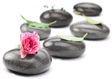 Set of spa massage stones with rose. Stock Images