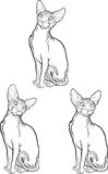 Set of sphynx cat. Vector illustration. Tattoo style. Stock Photography
