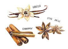 Set of spice, drawing by watercolor, hand drawn illustration Stock Photo