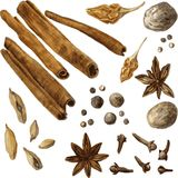 Set of spice, drawing by watercolor Stock Images