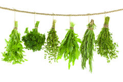 Set of Spice Herbs / Hanging and Drying / on white bac. Set of Spice Herbs / on white background / bunches of thyme, basil, oregano, parsley, sage and rosemary royalty free stock photography