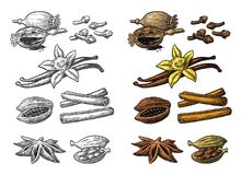 Set of spices. Anise, cinnamon, cocoa, vanilla, poppy. Set of spices. Anise star, cardamom, clove, cinnamon stick, fruits of cocoa beans, vanilla stick and Stock Photos