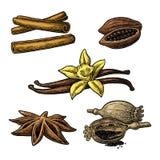 Set of spices. Anise, cinnamon, cocoa, vanilla, poppy Royalty Free Stock Photo