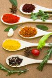 Set of spices and herbs on a corkwood. Cooking hot spicy meal. A set of four different spices in wooden spoons, fresh cherry tomatoe, garlic, rosemary and salvia Royalty Free Stock Photography
