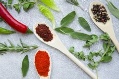 Set of spices and herbs on light stone background. Dry spices and herbs in wooden spoons with fresh herb springs, chili pepper and garlic on a light stone Royalty Free Stock Photos