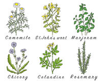 Set of spices, herbs and officinale plants icons. Royalty Free Stock Photos