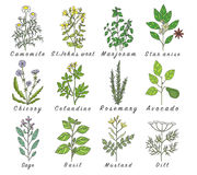 Set of spices, herbs and officinale plants icons. Healing plants Stock Image