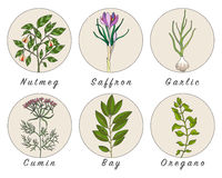 Set of spices, herbs and officinale plants icons. Healing plants. Medicinal plants, herbs, spices hand drawn illustrations. Botanic sketches icons Royalty Free Stock Image