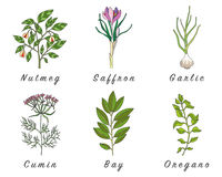 Set of spices, herbs and officinale plants icons. Healing plants. Medicinal plants, herbs, spices hand drawn illustrations. Botanic sketches icons Royalty Free Stock Photo