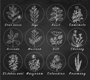 Set of spices, herbs and officinale plants icons. Healing plants. Medicinal plants, herbs, spices hand drawn illustrations. Botanic sketches icons. Blackboard Royalty Free Stock Photo