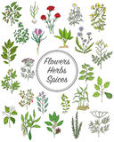 Set of spices, herbs and officinale plants icons. Healing plants. Medicinal plants, herbs, spices hand drawn illustrations. Botanic sketches icons Stock Photos