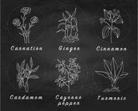 Set of spices, herbs and officinale plants icons. Healing plants. Medicinal plants, herbs, spices hand drawn illustrations. Botanic sketches icons Stock Photography