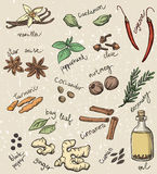 Set of spices and herbs vector illustration Royalty Free Stock Images