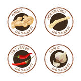 Set of spices labels. 100 organic. collection. Set of herbs labels. 100 organic. Spice collection. Vector illustration. Horseradish, ginger, chili pepper, garlic Stock Photography