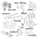 Set of spices in the sketch. Anise, cardamom, cinnamon, allspice Royalty Free Stock Photo
