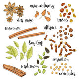 Set of spices in the sketch. Anise, cardamom, cinnamon, allspice Royalty Free Stock Photos