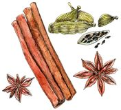Watercolor cinnamon, cardamom and star anise. Set of spices: star anise, cinnamon and cardamom - watercolor painting on white background royalty free illustration