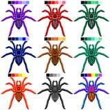 Spiders Tarantulas Set of 9 Colors royalty free illustration