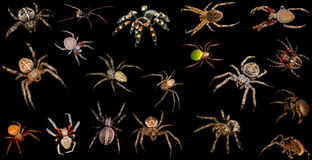 Set of spiders over black background Royalty Free Stock Images