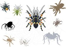 Set of spiders and webs Stock Photography