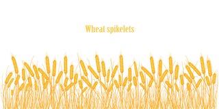 Set spikelets złota banatka, żyto, jęczmień na białym tle różnorodni kształty Obrazy Stock