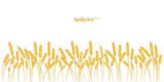 Set spikelets złota banatka, żyto, jęczmień na białym tle różnorodni kształty Zdjęcia Stock