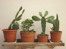 set spiny suckulent typ för kaktusväxt Royaltyfri Bild