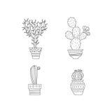 set spiny suckulent typ för kaktusväxt Arkivbild