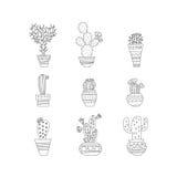 set spiny suckulent typ för kaktusväxt Royaltyfri Foto