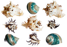 Set of spiral shells Royalty Free Stock Photo